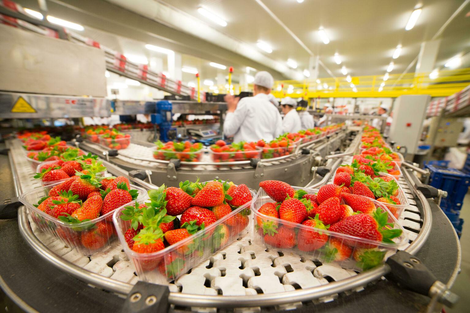 Huelva bate su récord histórico de exportación de frutos rojos